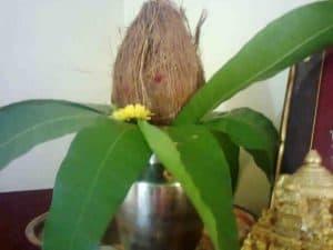 Golu coconut copy